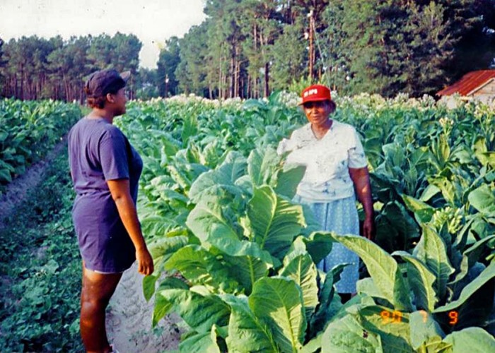 The Women Tobacco Farmers in My Life