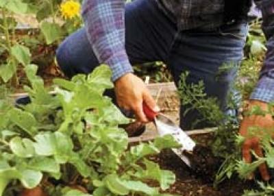 Planting in Summer's Heat