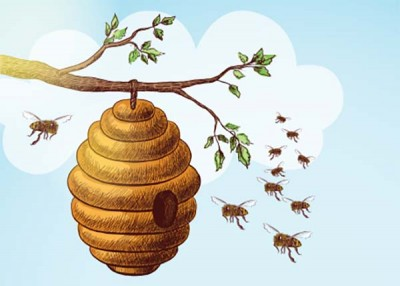 Thank the hardworking bees
