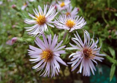 Native Plants for All Seasons