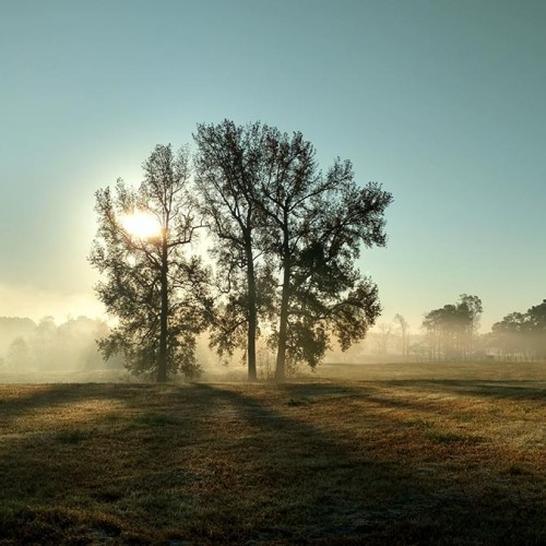Sun rays light up the mist on this early fall morning in North Carolina. —Deborah Masone, Youngsville, Wake Electric