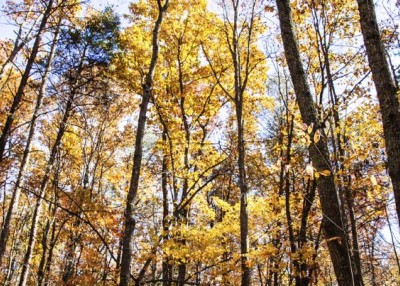 Protecting family forests