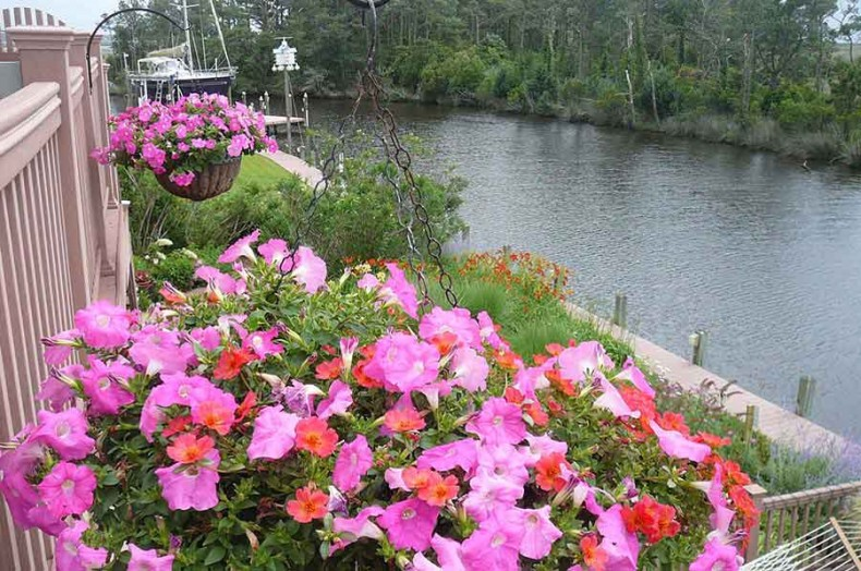 Flowers by the Sound
