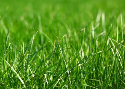 How do you like your lawn?