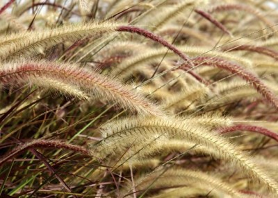 Grasses Are More Than Green