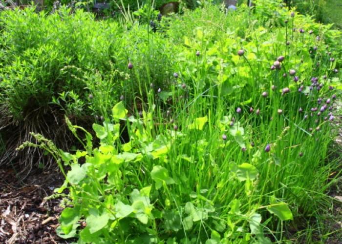 Easy herbs
