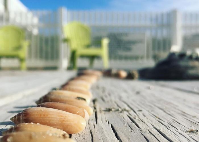 Top Spots for NC Beachcombers