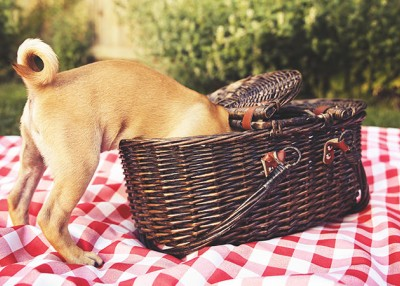 5 Easy Treat Recipes for Your Pet