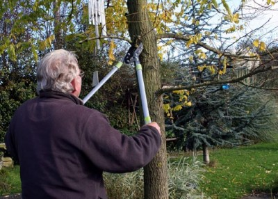 The hidden costs of tree topping