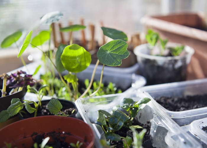 3 Easy Changes to Make Your Home More Eco-Friendly