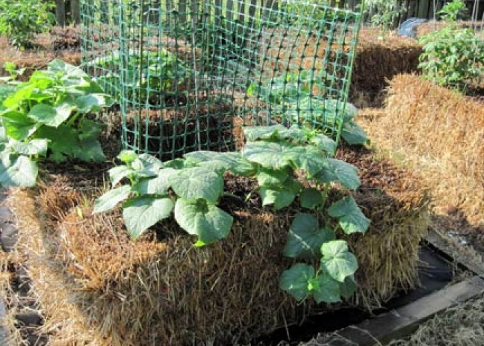 How To Grow A Straw-Bale Garden