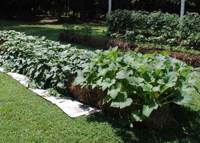 Grow a straw bale garden