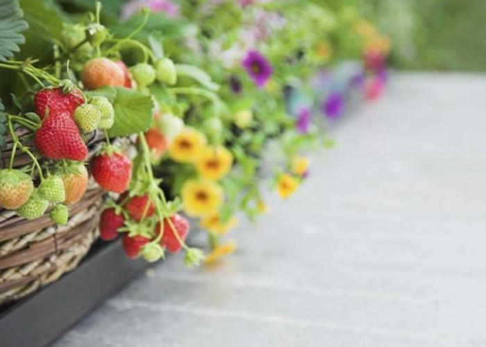Gardening for everyone