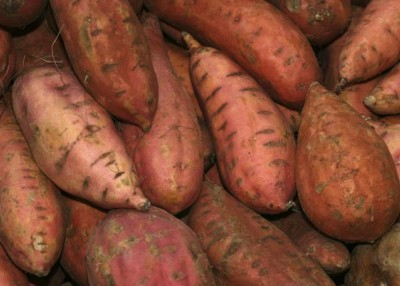 Sweet potatoes love North Carolina's sandy soil