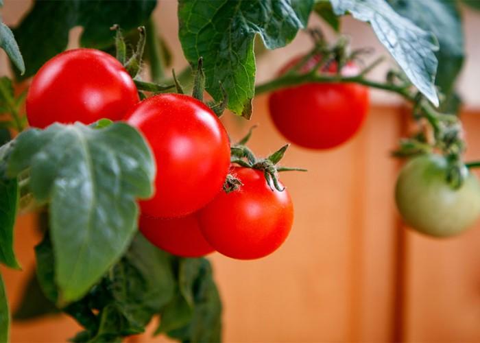 The Fun of Food Gardening
