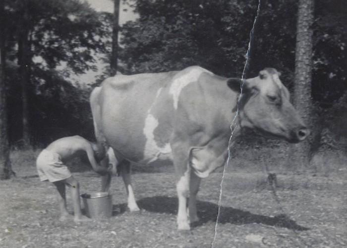 Milking Chores