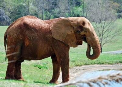 The North Carolina Zoo turns 40